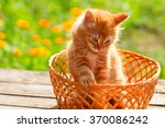 Stock photo little red cat in a wicker basket on green grass outdoors 370086242