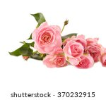 beautiful single rose isolated | Shutterstock . vector #370232915