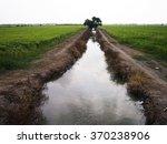 Watercourse Between Rice Fields