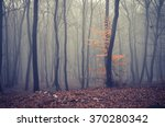 Late Autumn Forest In The Fog ...