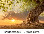 beautiful scence of big tree... | Shutterstock . vector #370361396
