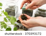 herbal medicine .dried herbs ... | Shutterstock . vector #370393172