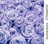 Bunch Of Lilac Colored Rose...