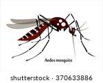mosquito species aedes aegyti... | Shutterstock .eps vector #370633886