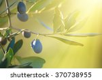 olive tree with fruits  natural ... | Shutterstock . vector #370738955