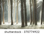 Maritime Pine Tree Forest And...