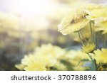 yellow flower with sunny light | Shutterstock . vector #370788896