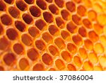 Close up of honey cell - stock photo