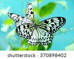 mating rice paper butterflies ... | Shutterstock . vector #370898402