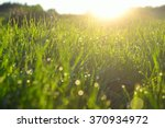 grass with water drops in the... | Shutterstock . vector #370934972