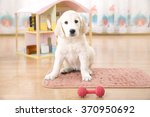Stock photo portrait of golden retriever puppy sitting on the floor 370950692