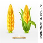 vector two corn on the cob with ... | Shutterstock .eps vector #371043272
