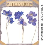 Herbarium. Set Pressed Blue...
