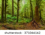 sol duc rainforest at olympic... | Shutterstock . vector #371066162