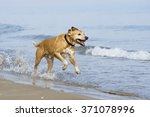 happy dog plays at the beach | Shutterstock . vector #371078996