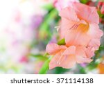 beautiful flowers  for... | Shutterstock . vector #371114138