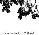 tree leaves | Shutterstock .eps vector #37113961