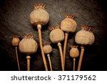 Opium Poppy  Papaver Somniferu...