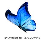 Color Butterfly  Isolated On...