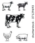 farm animals on scratchboard | Shutterstock . vector #37129693
