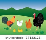 air,animal,beak,beauty,best,chicken,cock,comb,countryside,farm,farming,faucet,feathers,flap,fowl
