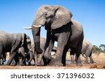 Small photo of African Elephants in Botswana