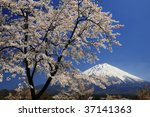 the cherry trees are in full... | Shutterstock . vector #37141363