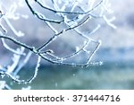 frosted tree twig under snowfall | Shutterstock . vector #371444716