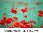 poppies flower and bees spring... | Shutterstock . vector #371459695