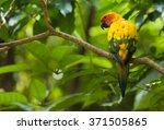 Colorful Sun Conure Bird...
