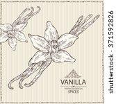 background with vanilla   hand... | Shutterstock .eps vector #371592826