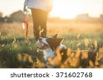 Stock photo beautiful border collie lying in the grass after long play 371602768