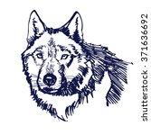 wolf hand drawn vector...   Shutterstock .eps vector #371636692
