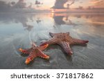 Two Starfish On Summer Beach A...