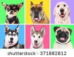 portraits of cute dogs on... | Shutterstock . vector #371882812