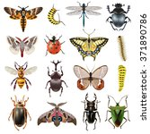 insects realistic icons set... | Shutterstock .eps vector #371890786