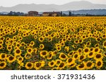 countryside and sunflowers near ... | Shutterstock . vector #371931436