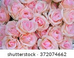 Stock photo pink rose for backgrounds 372074662