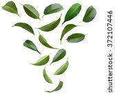collage of beautiful green... | Shutterstock . vector #372107446