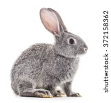 Stock photo grey baby rabbit on a white background 372158362