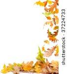 Falling Autumn Oak Leaves...
