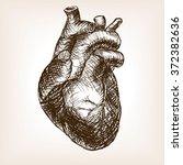 human heart sketch style raster ... | Shutterstock . vector #372382636