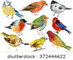 birds set. watercolor.  hand... | Shutterstock . vector #372444622