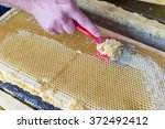 Small photo of A beekeeper uses an unccaping fork to scrape along the honeycomb and remove wax caps before extracting honey in the centrifuge.