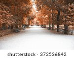 forest in autumn time | Shutterstock . vector #372536842