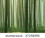 green foggy forest in autumn | Shutterstock . vector #37258390