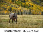 horse with fall color in teton...   Shutterstock . vector #372675562