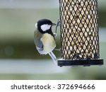 Great Tit Sitting And Eating O...
