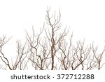 tree branches isolated... | Shutterstock . vector #372712288