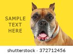 boxer dog on yellow background | Shutterstock . vector #372712456